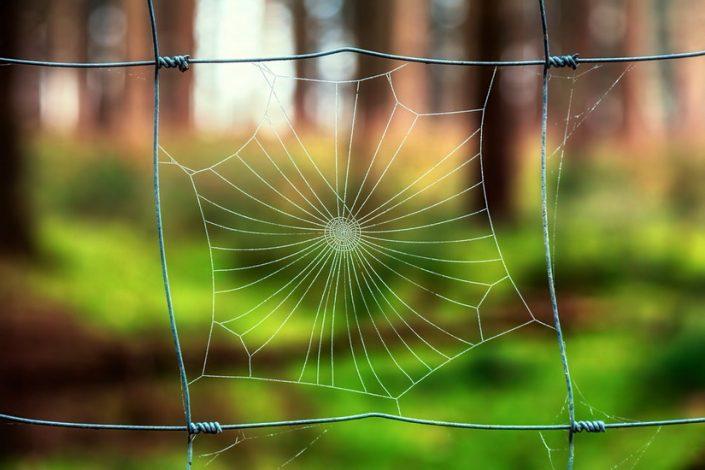 วิธีไล่แมงมุมออกจากบ้านโดยวิธีธรรมชาติ