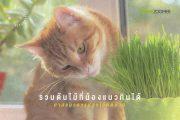รวมต้นไม้ที่น้องแมวกินได้ ทาสแมวควรปลูกไว้ติดบ้าน